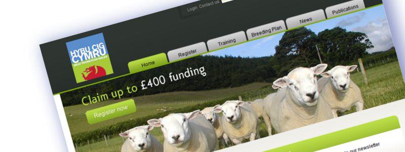 MCM2 | Digital Marketing Nantwich | sheep