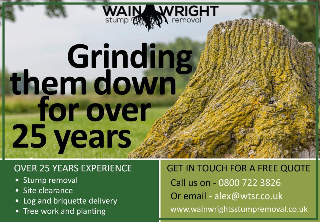 MCM2 | Digital Marketing Agency Cheshire | Tree Stump