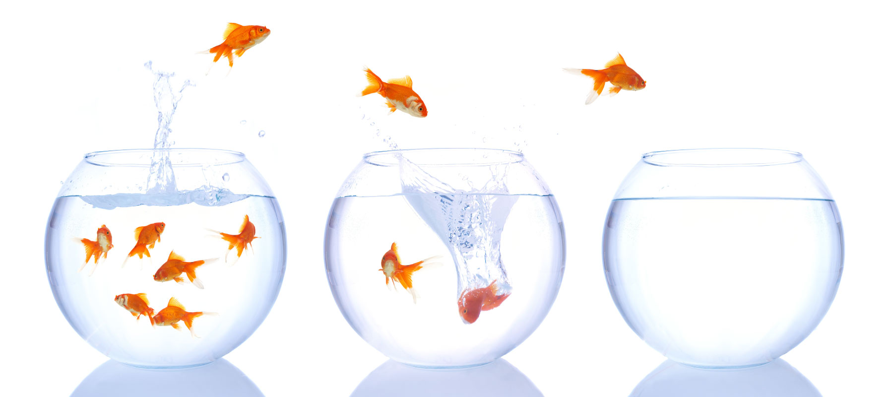 MCM2 | Digital Marketing Agency Cheshire | Goldfish bowls